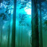 「森」と「林」はどう区別すればよい?