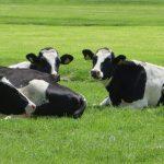 「牛耳る」って、どうして「牛」の「耳」が関係するの?