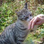 猫の手も借りたいって、何で「猫」なの?